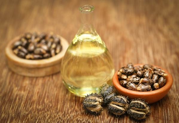 Graines et huile de ricin